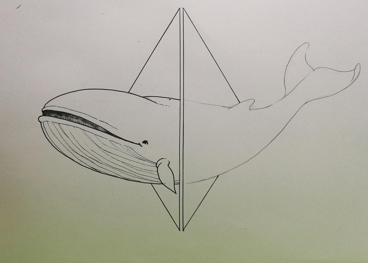 可爱蓝鲸简笔画