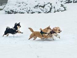 【纪实宠物摄影】杭城入冬的雪精灵