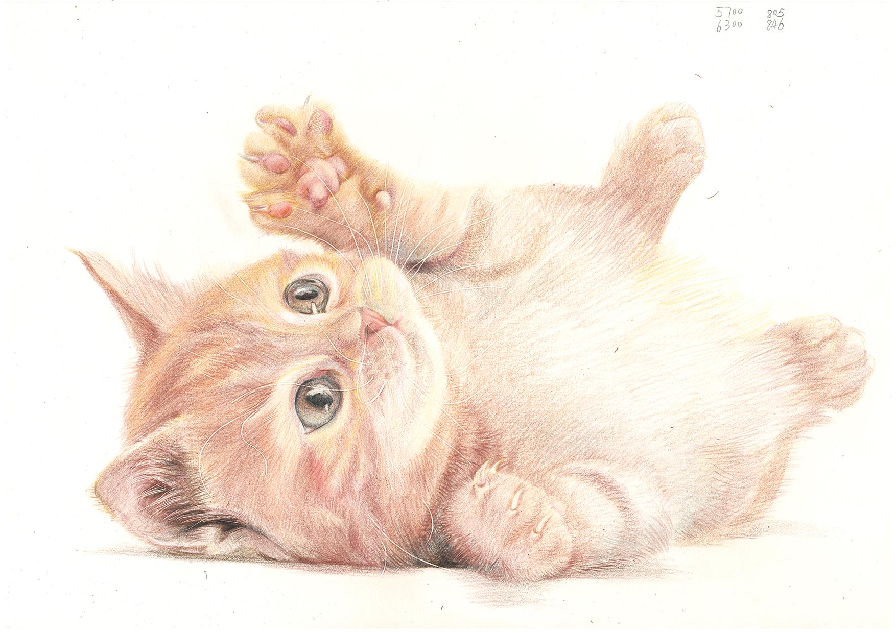 萌猫一只,彩铅练习