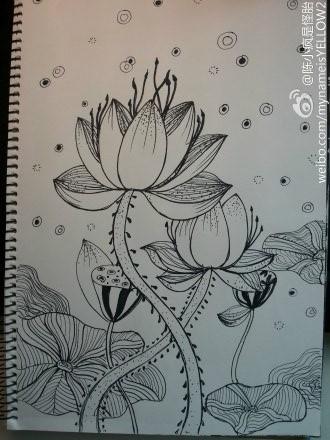 黑白荷花手绘图片简单