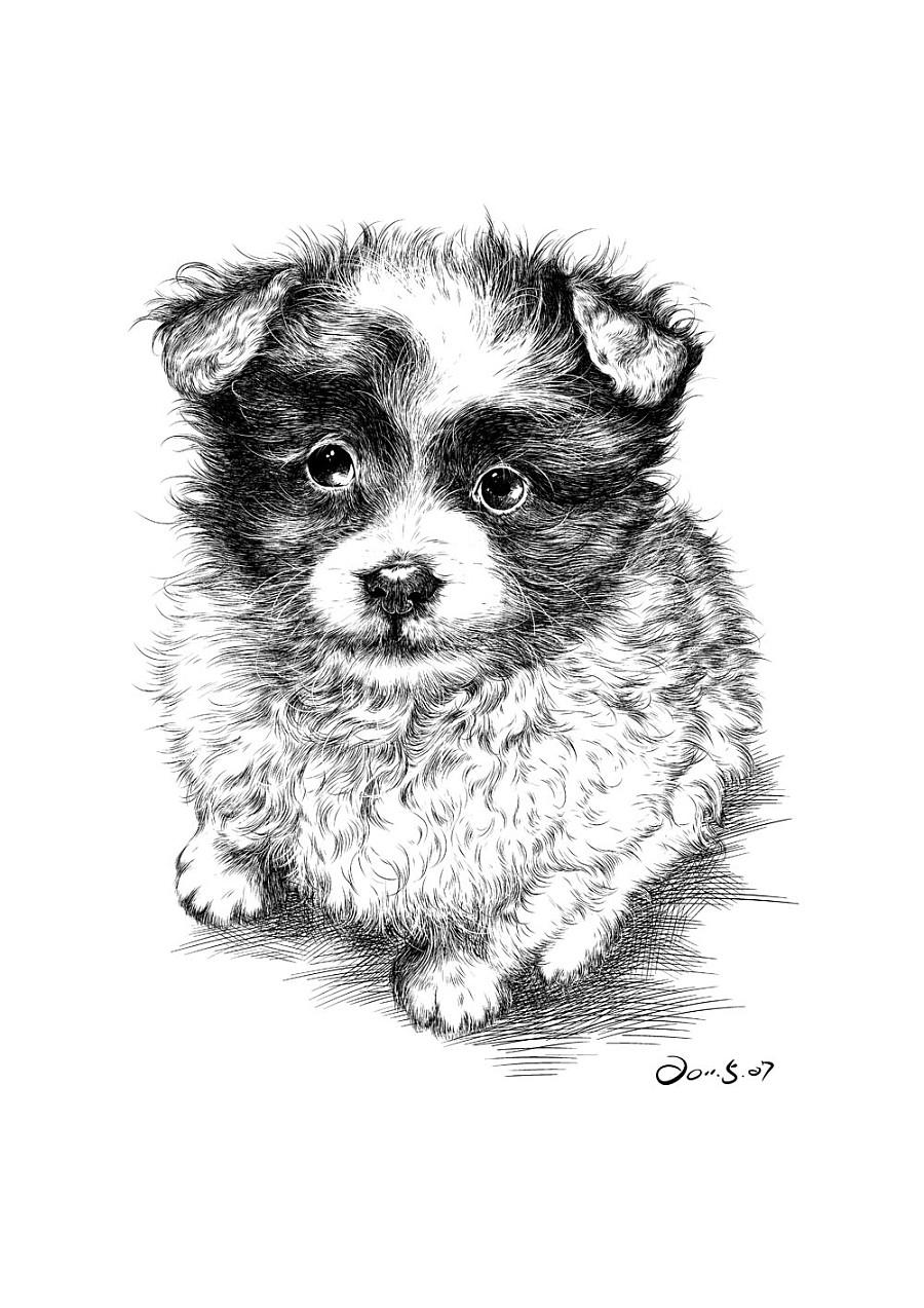 原创作品:楚歌钢笔画-动物系列2