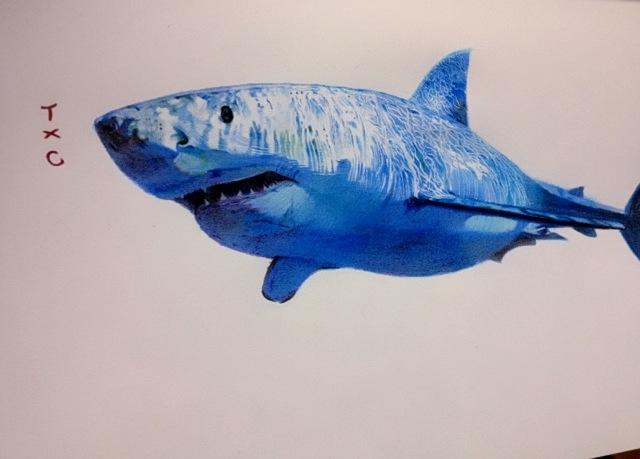 原创作品:鲨鱼.图片
