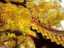 济南淌豆寺秋景