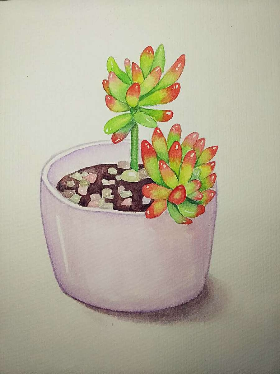 水彩,彩铅手绘练习