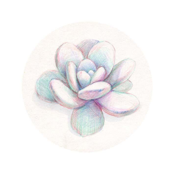 彩铅多肉植物|绘画习作|插画|尚小津 - 原创设计作品图片