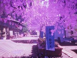虚幻4(UE4)渲染场景--樱花街道