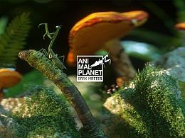 ANIMAL PLANET | 动物星球  蜘蛛/螳螂/蘑菇