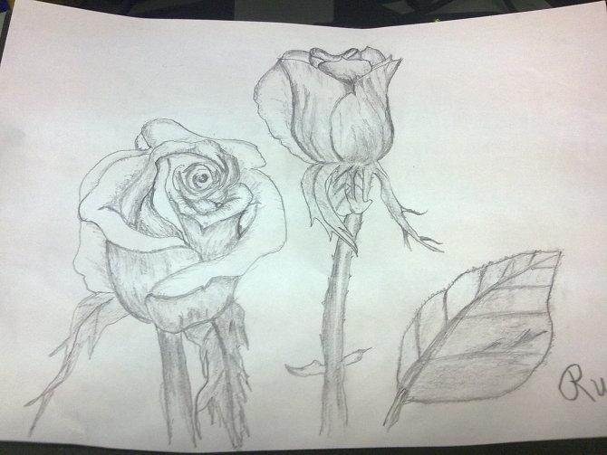 玫瑰花 素描 图片 铅笔画展示