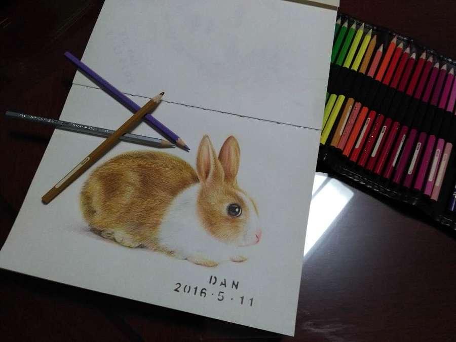 铅笔画兔子