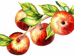 三皇山苹果包装