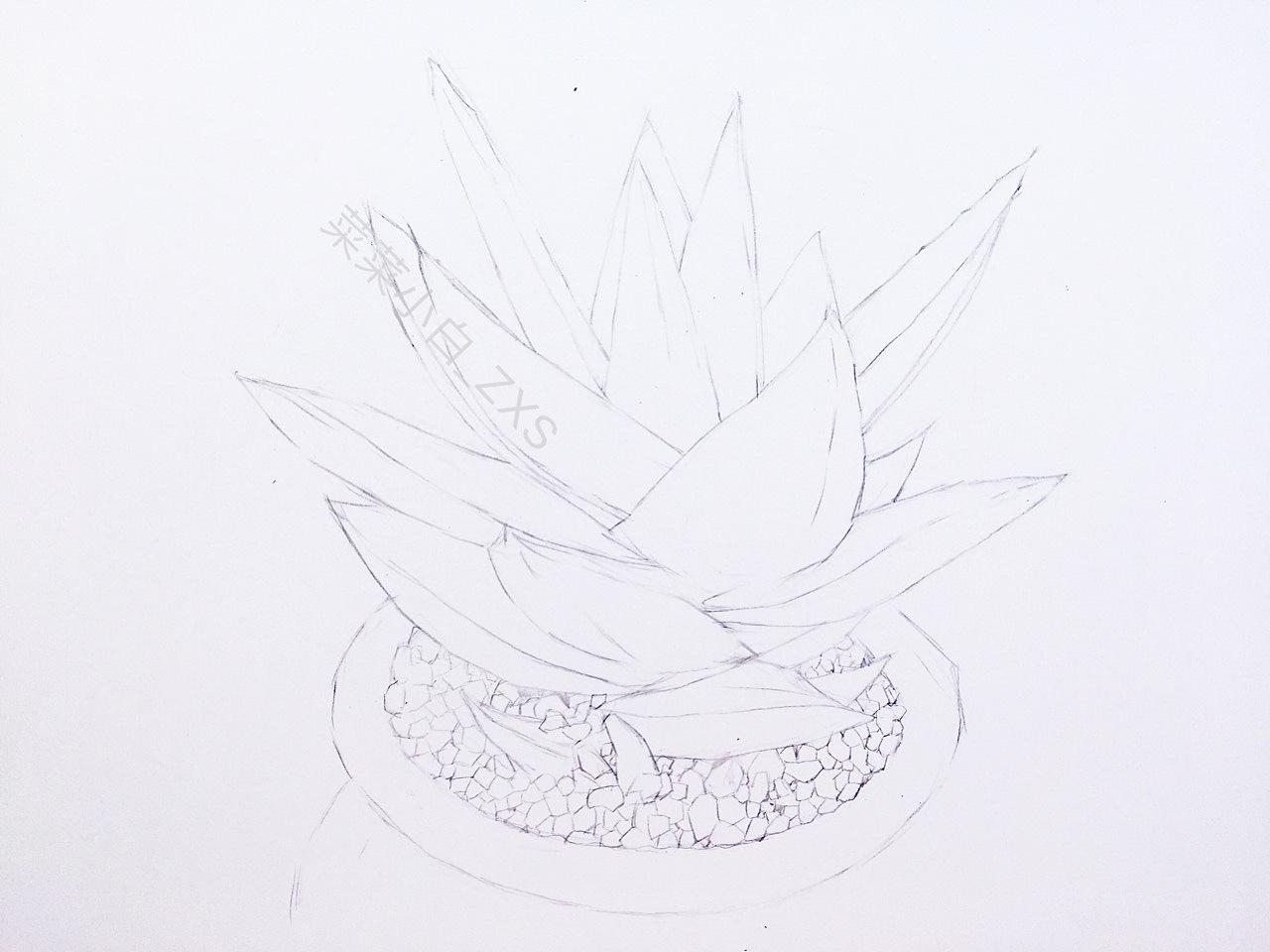 彩铅手绘—小芦荟