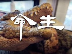 生命系列-狂蟒巨鳄