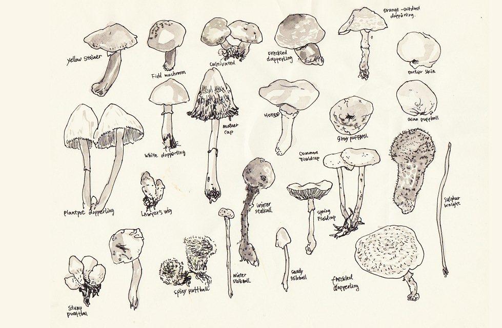 手绘蘑菇素描图片