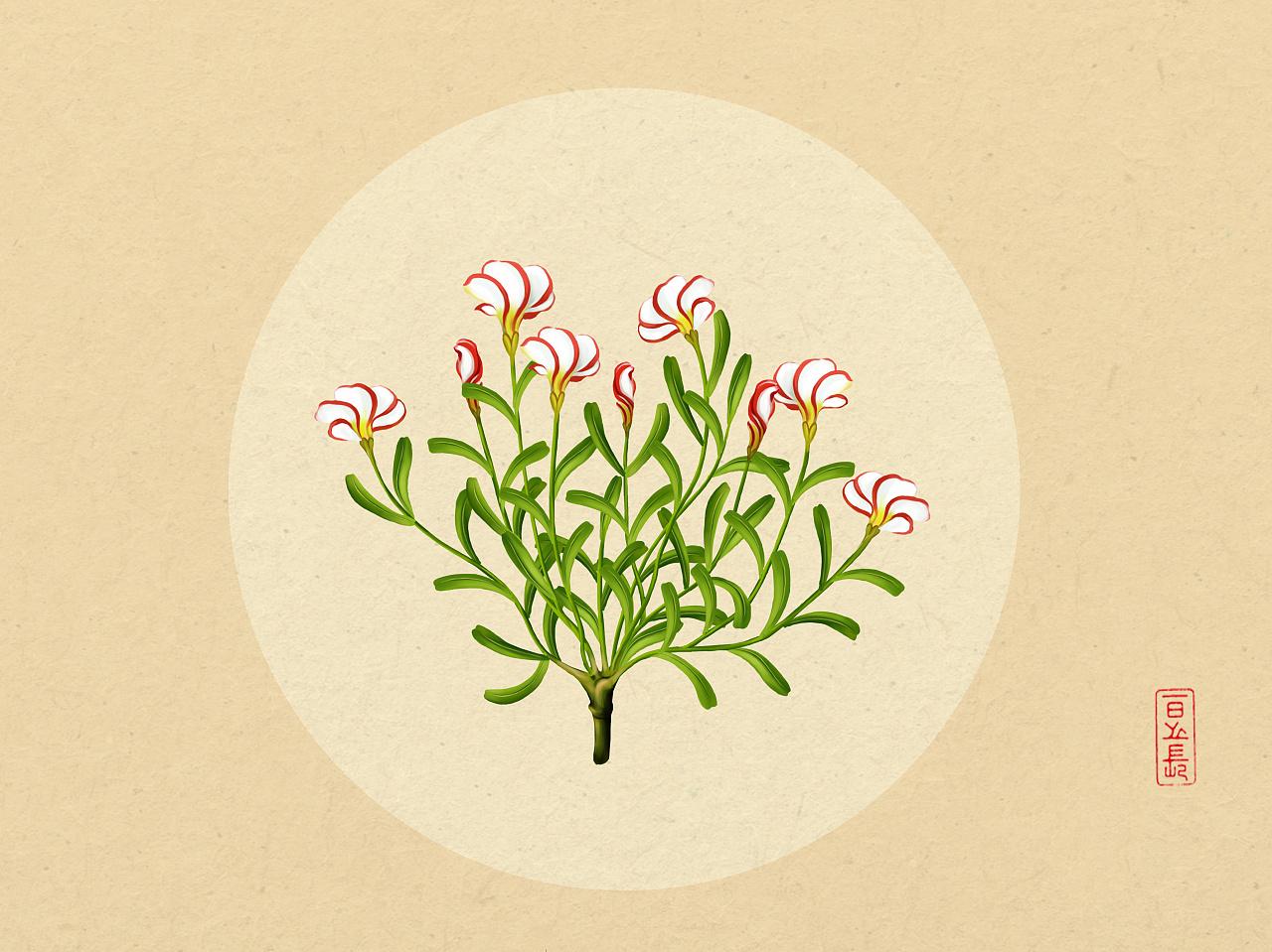 植物插画系列(三)|插画|商业插画|日光倾城417 - 原创