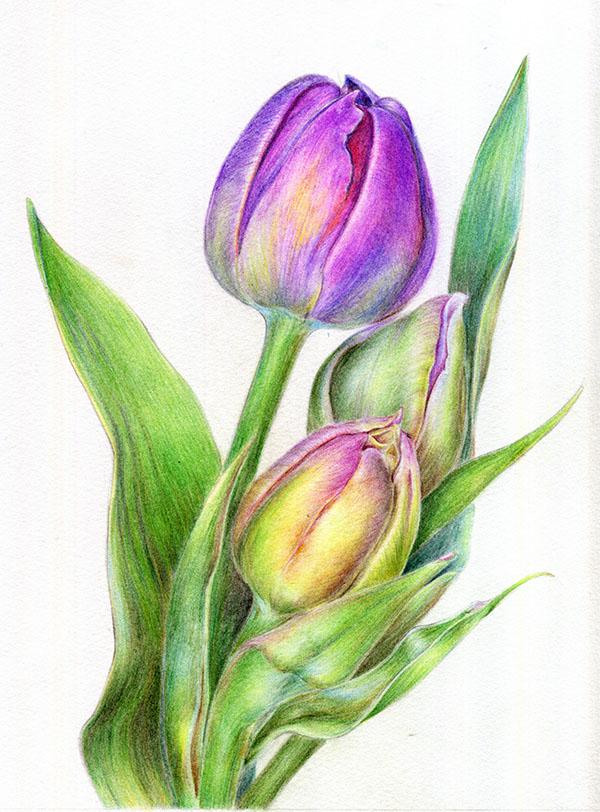 彩铅 花卉