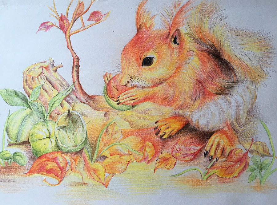 彩铅作品(临摹):松鼠与松果