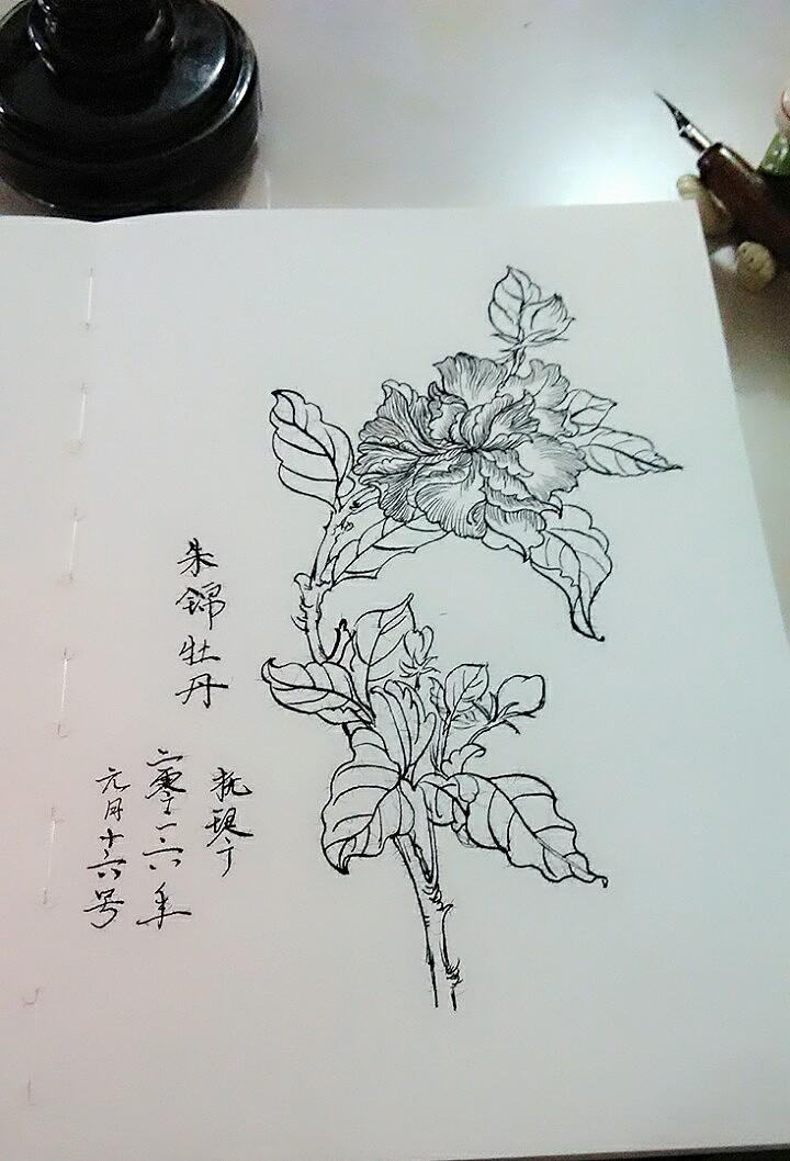 农业,花卉类白描图片