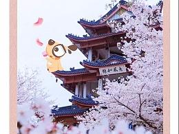 樱花季一套图