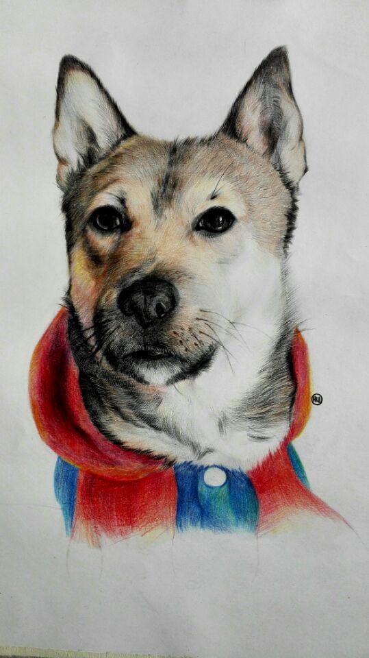 彩铅手绘 动物|彩铅|纯艺术|兰格