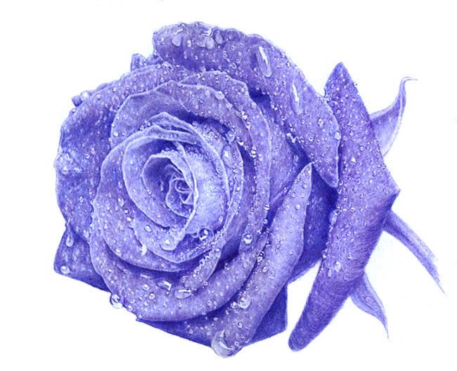 王抽风圆珠笔手绘《蓝玫瑰》|素描|纯艺术|反光