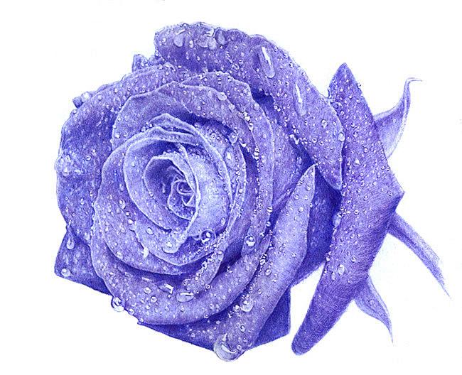 王抽风圆珠笔手绘《蓝玫瑰》