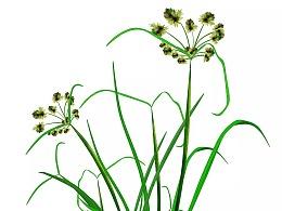一组植物插图