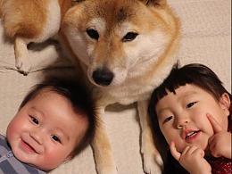 原来最有用的东西 是温暖和陪伴,:dog:狗也不例外