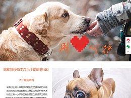 派多格宠物医院网站