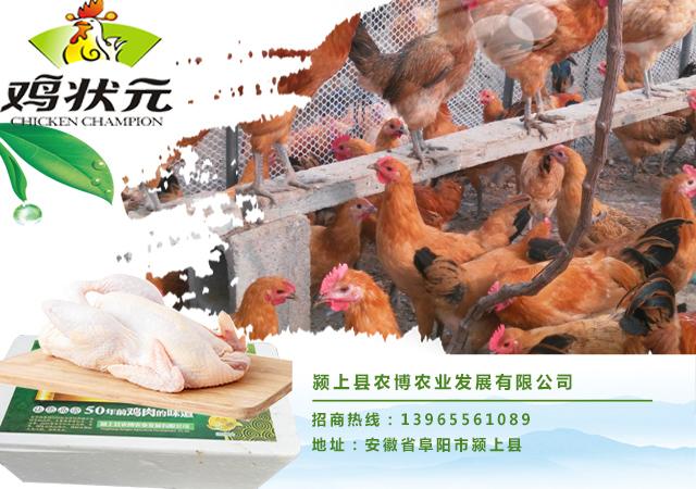生态v生态banner,农家乐banner,虫子鸡广告,语言室内设计亮点蔬菜集图片