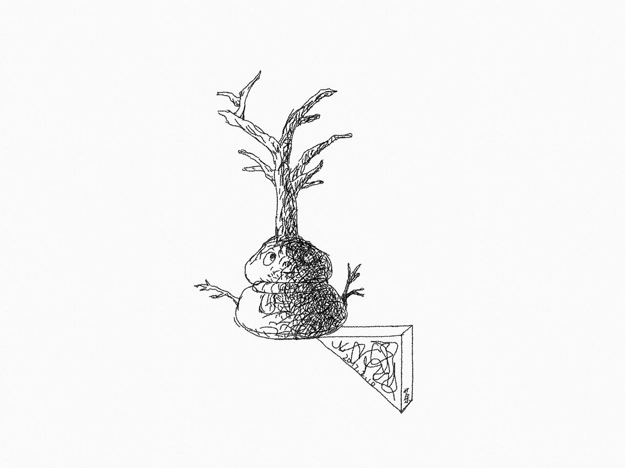 树木交错的枝梢,神秘莫测.