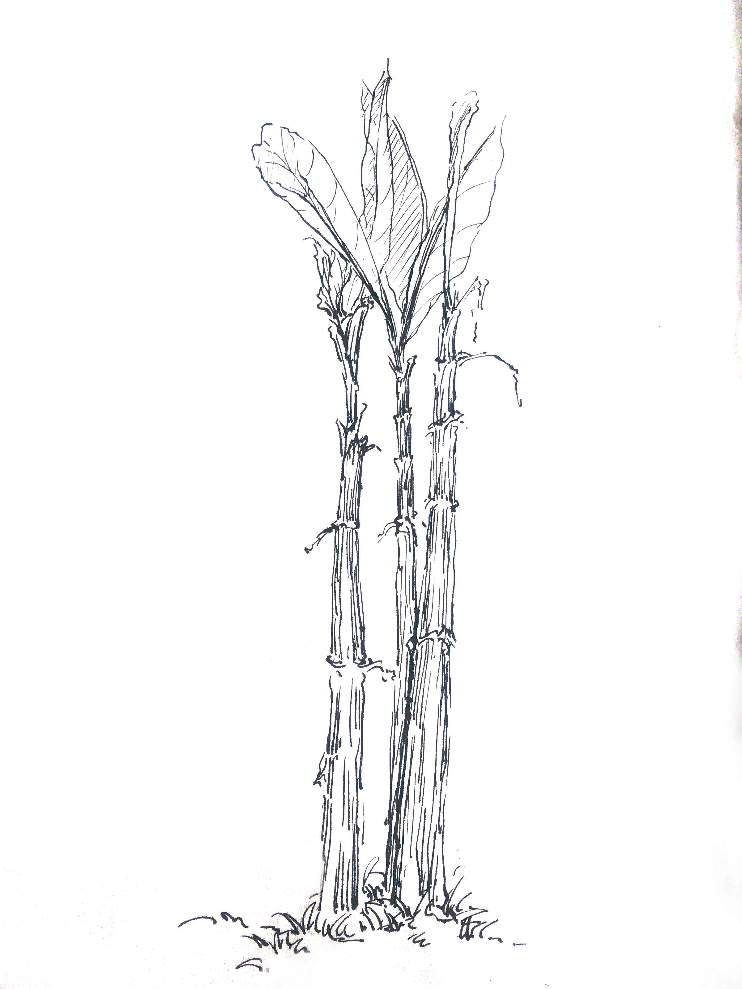 简单的动植物|纯艺术|钢笔画|吃鱼的兔子mj - 原创
