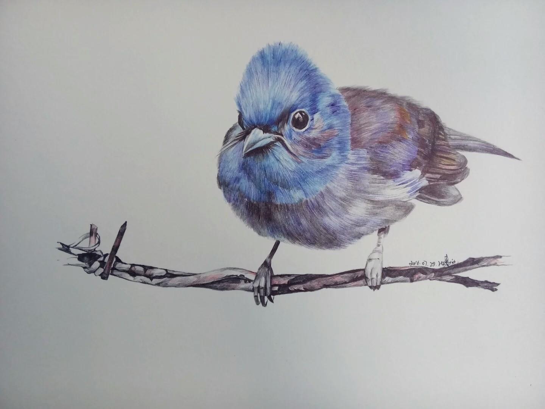 圆珠笔画动物
