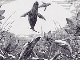 一组鲸鱼小画
