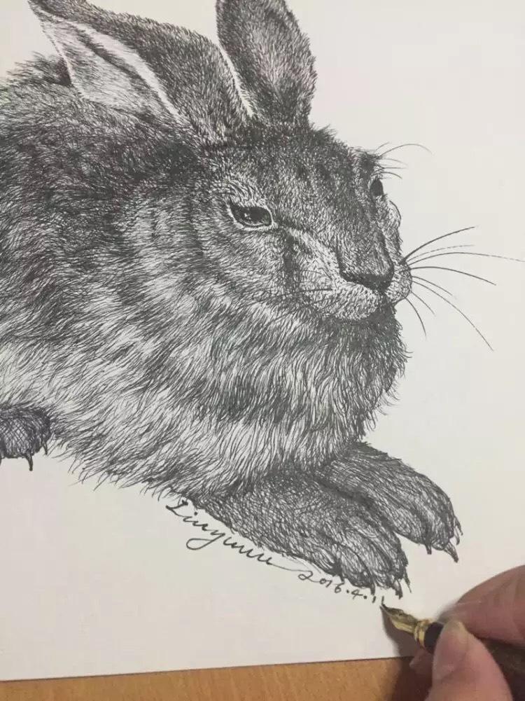 钢笔临摹丢勒的兔子