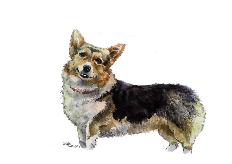 马克笔 手绘 动物