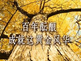 DynaFont古籍字体──华康古籍银杏