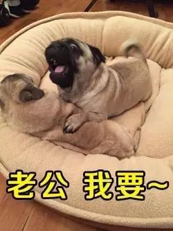 阿怪图片第三期,狗笑得搞笑,名字疯了世界大全表情表情无邪2015的最新版图片