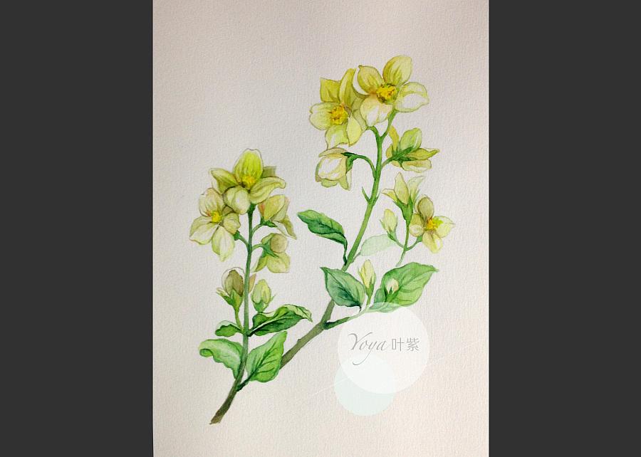 手绘水彩植物纯露瓶贴包装设计
