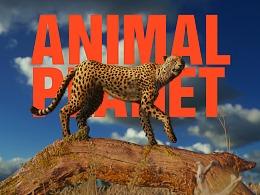 ANIMAL PLANET | 动物星球 ·  狂野非洲