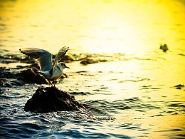 展翅的海鸥·2019
