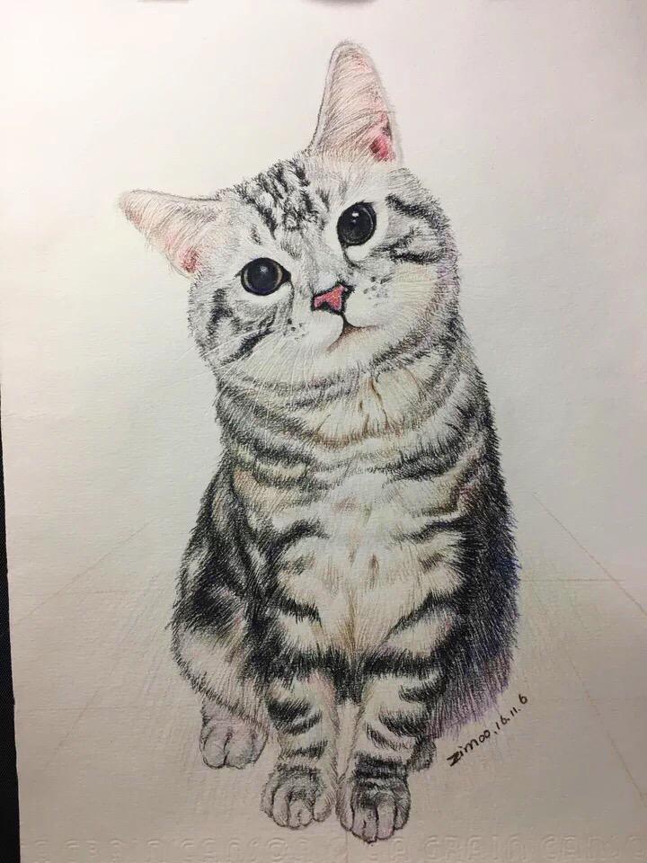 手绘彩铅——一只喵