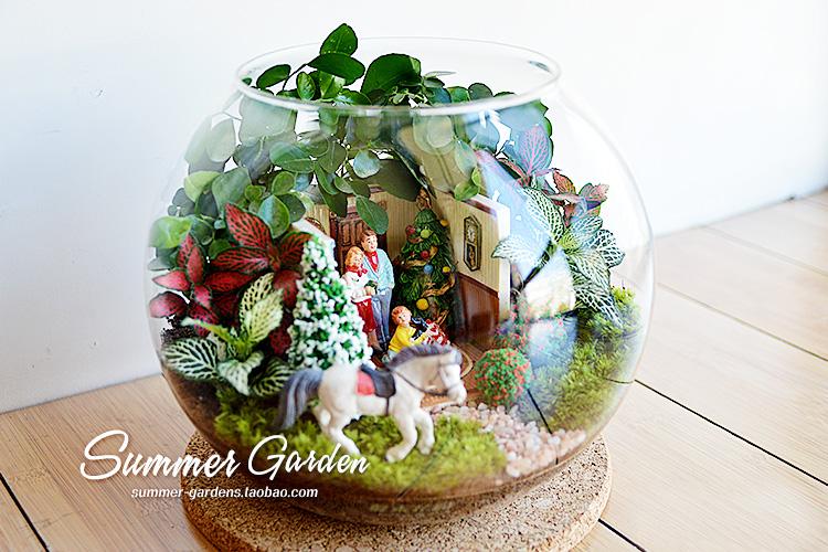 查看《绿植手作--幸福一家主题微景--《夏末花园成长日记33》》原图,原图尺寸:750x500