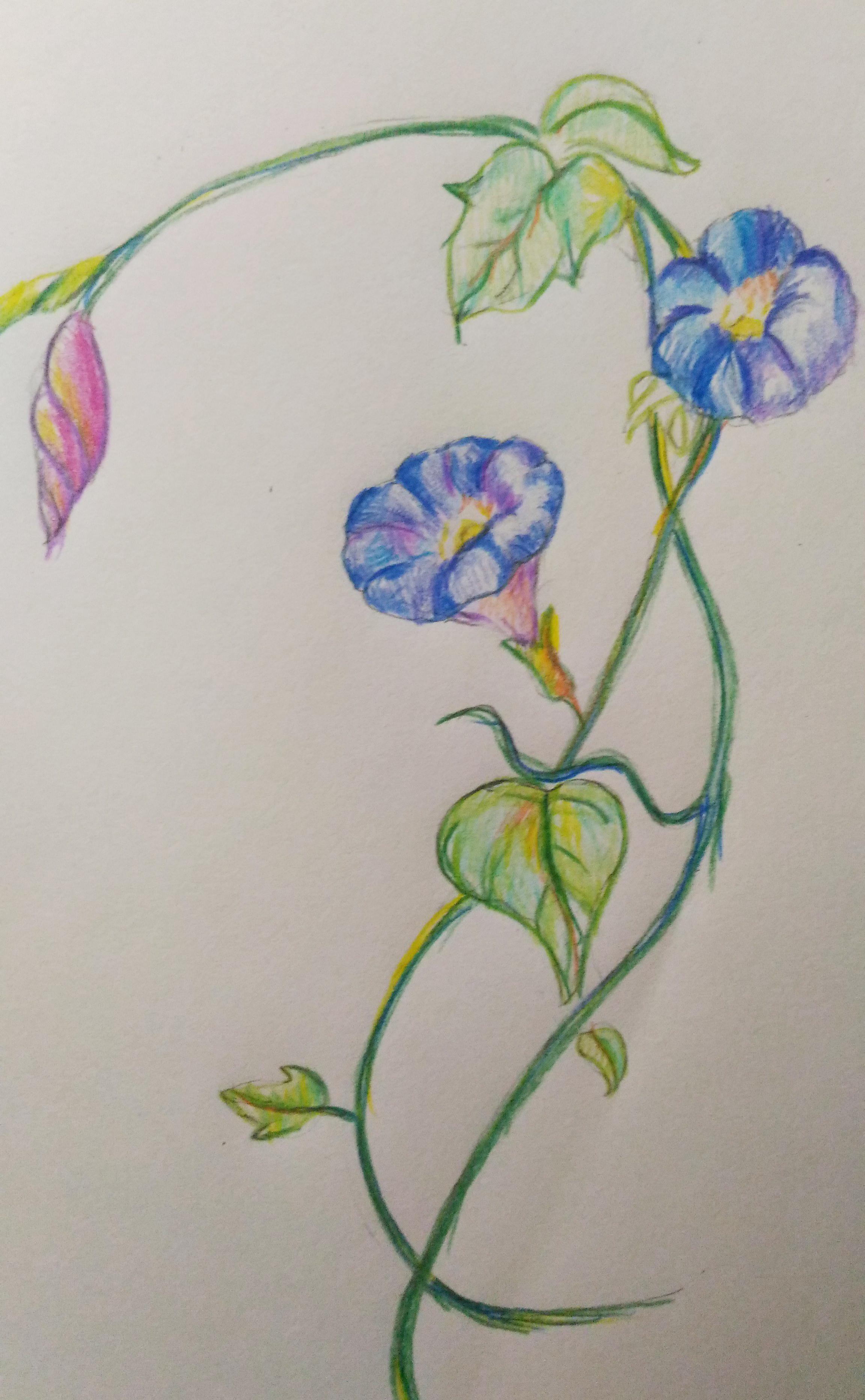 静物 手绘练习 彩铅上色
