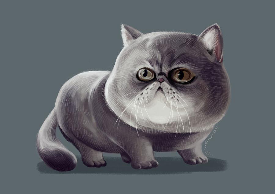 壁纸 动物 猫 猫咪 小猫 桌面 900_636