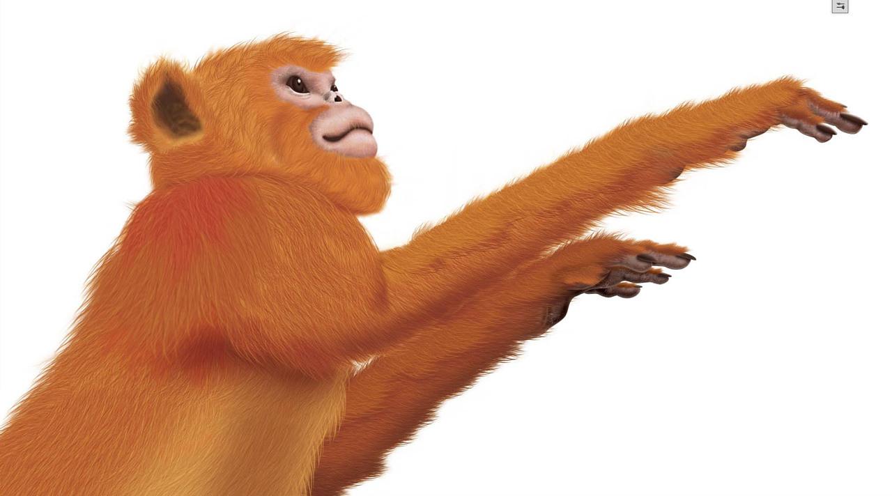 手腕上涨猴子_金猴子