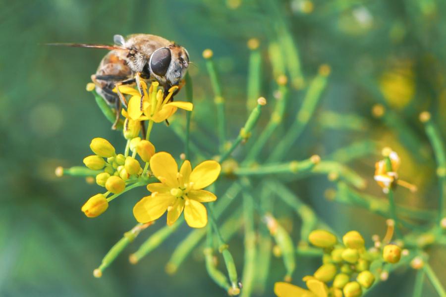 小动物呀采蜜忙 老虎/蜜蜂 摄影 vikihe-原创设宠物手游梦幻染色模拟器图片