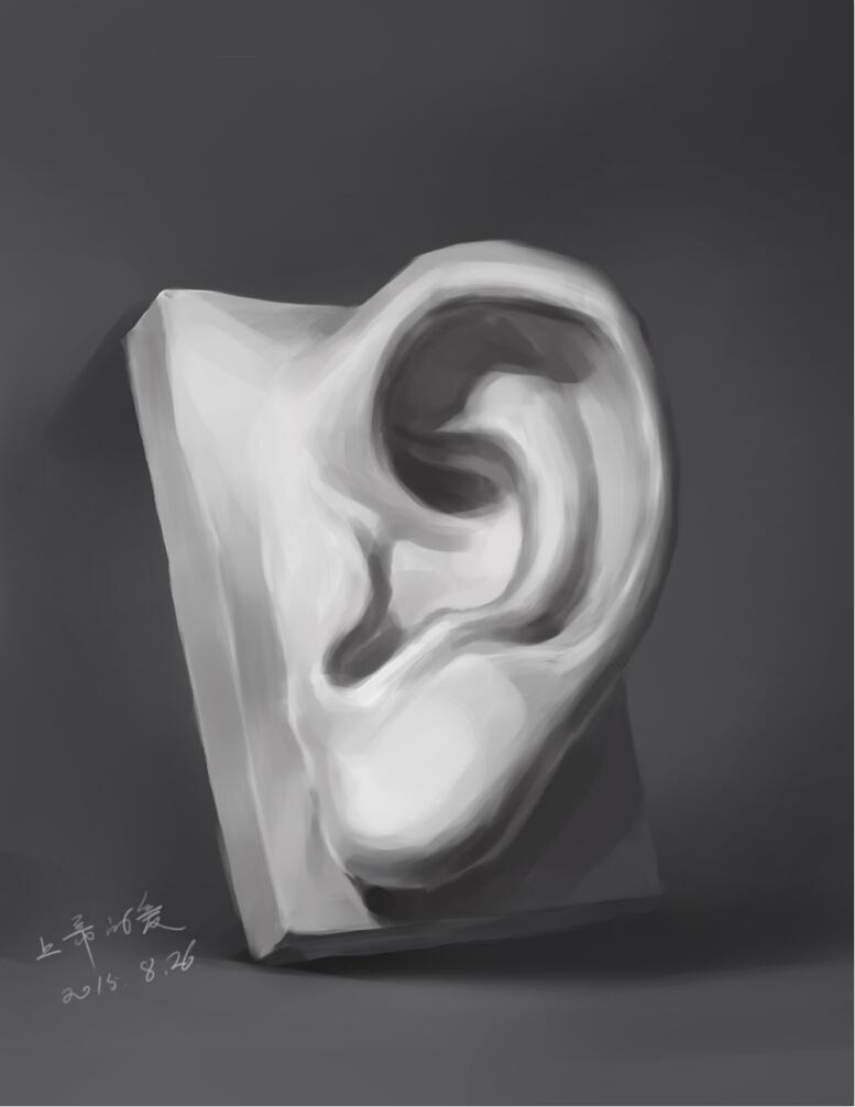 石膏五官临摹(耳朵)图片