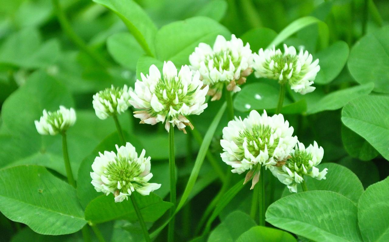 798手绘网花卉