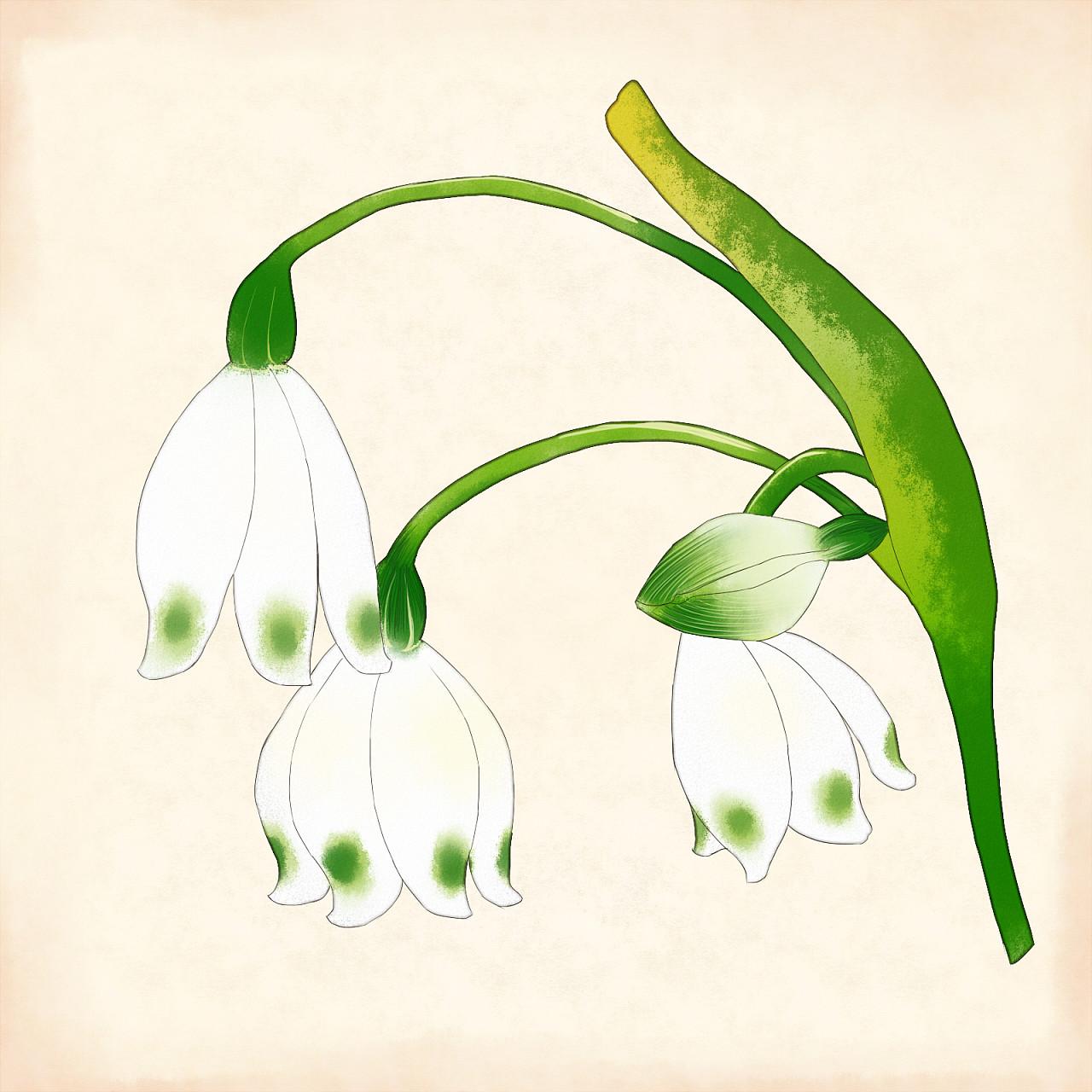 一些植物插画