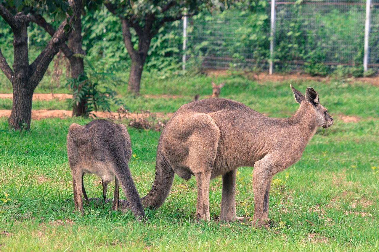 动物世界-北京野生动物园